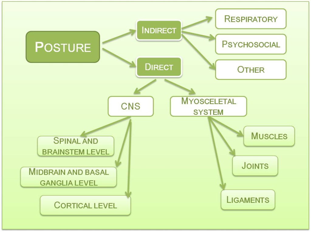 Hippotherapy effect on posture